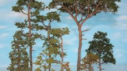 Arboris Miniature (Roland SCHNEPP)